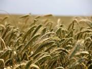 dopłaty bezpośrednie w rolnictwie